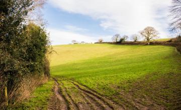 Sidbury, Harcombe & Sweetcombe Circular